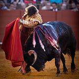 6 toro andres roca rey 2019 william lucas 18