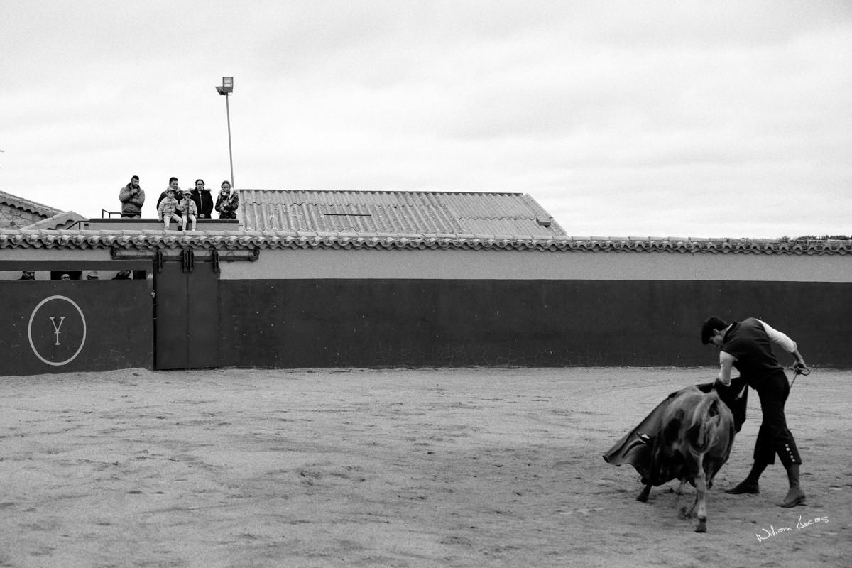 Tentadero miranda de pericalvo tri x 400 2017 william lucas